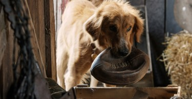 A-Dogs-Purpose-Gallery-03
