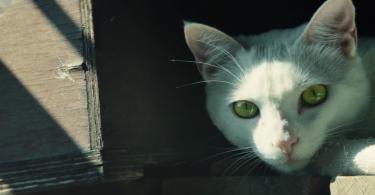 cat recon